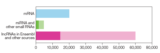 Estimates of human genes by class